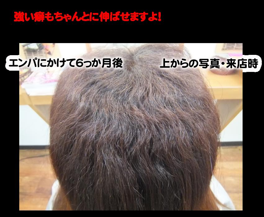 美髪革命 - ダツトリによる美髪革命はノートリ(濃厚トリートメント不要)環境で起こる